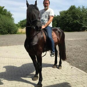 Hestetræning på Frieserhesten Tjalke ved Køge